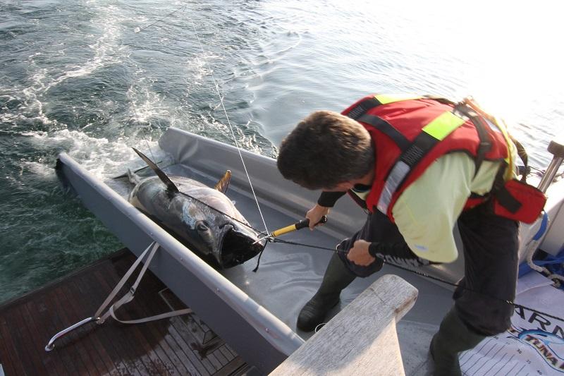 Stora tuna dating