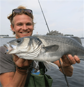 2020 Sea Bass fishing opportunities - EAA and EFTTA recommend a 3 fish bag limit per day