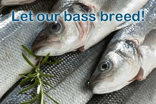 Angling Trust slams EU bass shambles as 'Anything but a fair deal'