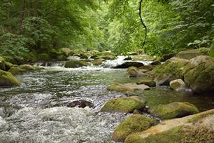 Better European river management with the AMBER project