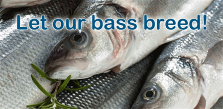 Let our bass breed!