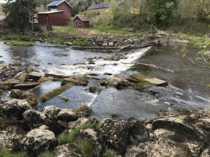 New dam removal projects in Sweden: anglers in action for free-flowing rivers