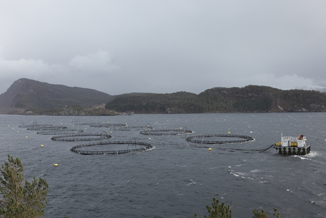 pens, open aquaculture systems are the  cause of the problem