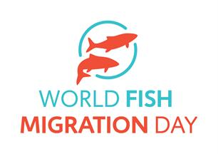 World Fish Migration Day 2020: Love Flows